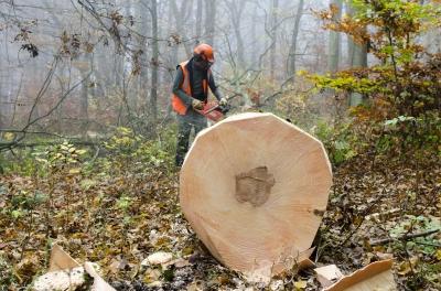 Chopping wood dan